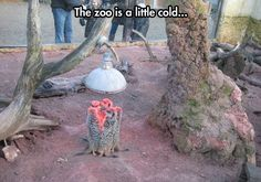 I don't think animals should be kept in zoos.  This makes me sad...