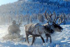 Reindeer sledding trip with Even herders in Oymyakon, Siberia, Russia