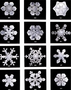 Snowflakes are a very well known example of crystallization, where subtle differences in crystal growth conditions result in different geometries.Snow flakes by Wilson Bentley. Bentley was a bachelor farmer whose hobby was photographing snow flakes The Snow, Snow And Ice, Snowflake Bentley, Karl Blossfeldt, Snowflake Photos, Real Snowflakes, Snowflakes Falling, Paper Snowflakes, Ice Crystals
