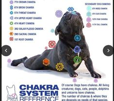 The dog chakra system is much like the human chakra system. The dog chakra system is balanced just like ours using loving intention, energy work or reiki. Pet Dogs, Dogs And Puppies, Dog Cat, Doggies, Pet Vet, Chakras, Bulldogs, Animal Reiki, Frozen Dog