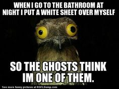 Trolling the ghost #meme #funny #ghost #lol #toilet