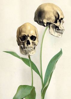 What will Goth Bethany's reaction be? Skull flowers