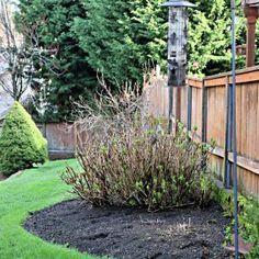Spring Lawn Care Tips - Winter Recovery Large Fairy Garden, Low Maintenance Garden Design, Solar Mason Jars, Lawn Care Tips, Diy Fountain, Herb Garden Design, Mosquito Repelling Plants, Garden Pests, Small Patio