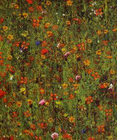Mawston Meadow A Tana Lawn, Liberty Art Fabrics. Shop more from the Liberty Art Fabrics collection at Liberty.co.uk
