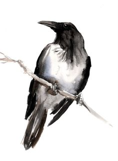 Hooded Crow original watercolor painting 12 X 9 in by ORIGINALONLY