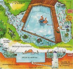 Concept de piscine écologique