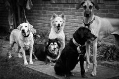 Part of the Pack by Ananda Tiller, via 500px
