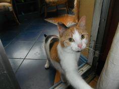 Poppy Cat   Pawshake