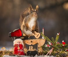 christmas candle light music by geertweggen #animals #animal #pet #pets #animales #animallovers #photooftheday #amazing #picoftheday