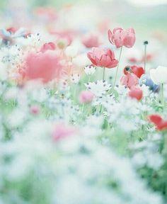 Pretty flowers, washed out photography, pastels Flowers Nature, My Flower, Wild Flowers, Beautiful Flowers, Pastel Flowers, Flower Wallpaper, Belle Photo, Planting Flowers, Nature Photography