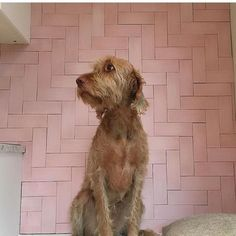 Pink Herringbone Tile