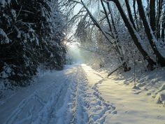 Snöig skogsväg.