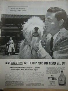 223 Best Vintage Bearded Collie - sheepdogs images in 2019