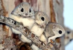 Yeah, I know...not squirrels, at least I don't think they are...they ARE adorable though!