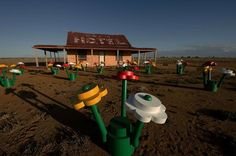 LEGO forest sprouts in Australian outback flowers