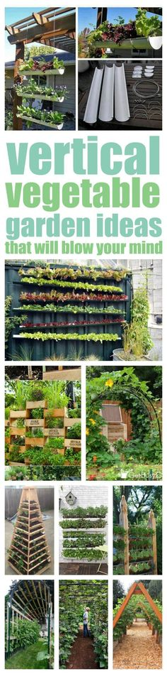 A vertical vegetable garden can be the mind blowing solution to your lack of garden space problem. Your dream of growing your own food IS possible.