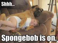 If Your Pets Could Talk: Adorable Animal Memes to Make You Smile - Momtastic