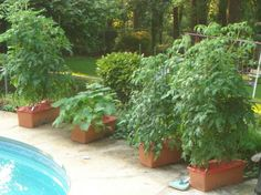 Tips for growing tomatoes in containers...More helpful info at http://www.tomatodirt.com/growing-tomatoes-in-pots.html.