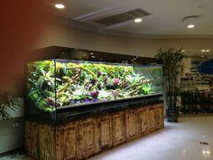 This is a terrarium. Reptile House, Reptile Room, Reptile Cage, Reptile Enclosure, Reptile Tanks, Gecko Terrarium, Reptile Terrarium, Diy Aquarium, Aquarium Design