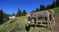 In #Trentino con la #famiglia potrete conoscere tantissimi #animali !