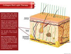 red light therapy - Google Search Red Light Therapy, Collagen, Skin Care, Google Search, Funny Quotes, Horses, Led, Red Lights, Funny Phrases