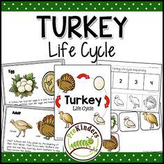Turkey Life Cycle   Thanksgiving Science   Preschool Pre-K