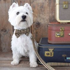 Handmade in London, this bow tie is crafted of Scottish Tweed and has a loop to slip over your dog's collar. Each one is hand-cut, stitched and hand-finished.