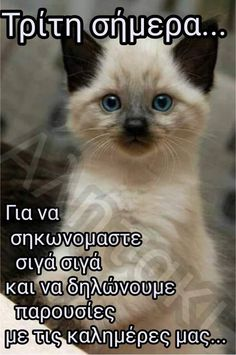 Animal Humour, Good Night Quotes, Cat Love, Something To Do, Cats, Life, Greek, Messages, Gatos