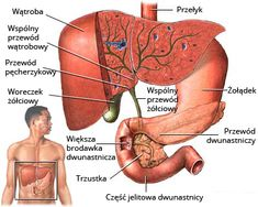 Choledocholithiasis – Causes, Symptoms, Diagnosis, Treatment and Ongoing care - Hosperity Gastritis Symptoms, Gastritis Diet, Bland Diet, Cottage Cheese Nutrition, Sign Solutions, Nursing Diagnosis, Healthy Eating Guidelines, Reflux Disease