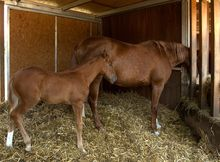 Night Time Eating and Sleeping Behaviors in Horses