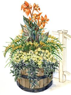 The robust flowers of the canna and the dark  purple foliage of the sweet potato vine make this design a study in the rich contrasts of  the tropics. This garden uses a half-barrel or equivalent sized container, and will grow  well in sun or partial shade and consistently moist soil.