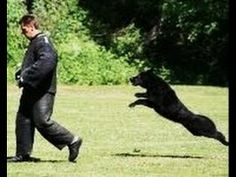 Amazing Military and Police K-9 working dogs!  KNPV HIGHLIGHTS SELECTION