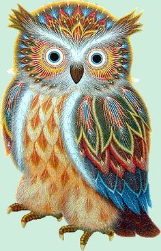 - Large King Owl - - Graphic Copyright K. Chin Gallery also known as the Great Horned Owl Owl Artwork, Owl Illustration, Owl Pictures, Owl Always Love You, Owl Jewelry, Unique Jewelry, Jewelery, Beautiful Owl, Owl Crafts