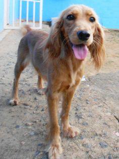e2045764d 10 Best Pets images | Cut animals, Cutest animals, Doggies