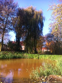 View from a bench in Uden, Nl