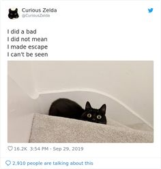 Funny Cat Names, Funny Poems, Funny Cats, Poem Memes, Cute Animal Memes, Cute Funny Animals, Cat Jokes, Puppies And Kitties, Pretty Cats