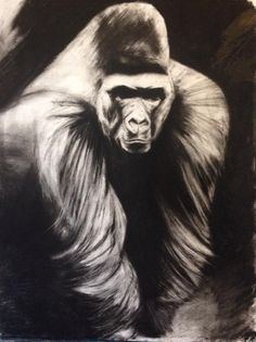 Chris Pontello - Charcoal gorilla drawing, concept for a tattoo
