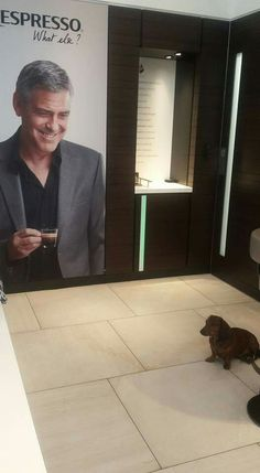 When even George Clooney admires my dog :)