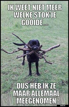 37 Absolutely Hilarious Animal Pictures - Funny Dog Quotes - Pretty Much The Best Website Ever. Order an oil painting of your pet now at www.petsinportrai The post 37 Absolutely Hilarious Animal Pictures appeared first on Gag Dad. Funny Animal Quotes, Animal Jokes, Cute Funny Animals, Funny Animal Pictures, Funny Cute, Funny Dogs, Random Pictures, Hilarious Animal Memes, Super Funny