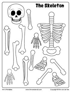 Halloween Skeleton Craft for Kids: Cut and paste the bones to create the skeleton. Skeleton Craft, Skeleton Flower, Cat Skeleton, Skeleton Drawings, Human Skeleton For Kids, Skeleton Puppet, Skeleton Theme, Dragon Skeleton, Skeleton King