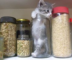 Cat flour.