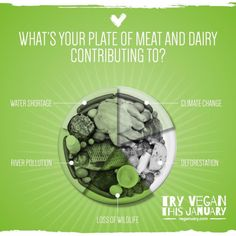 The #environmental case for #plantbased #ethical #vegan @WeAreVeganuary  The Meat & Dairy industry contributes to:  Water shortage  River pollution  Animal extinction  Deforestation  Climate change  An area of rainforest equivalent to a football field is cleared every second to provide space to grow animal feed and for grazing.  Because of this 110 animal and insect species are lost every day.  The charity Rainforest Concern estimate that: 1 lb beef = 200 sq m of rainforest destroyed…