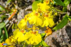 Stefanodav's Shot-Blog: Shines in the Sun... #stefanodav #kauai #hawaii #iamnikon #nikonphotography #travel #travelphotography #blogger #beutifulplace #placetovisit #usa #fiore #flower #flowerphotography