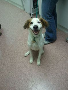 this is my I found my forever home happy face! - dog dogs puppy puppies cute