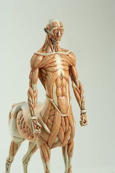easy way to learn muscle anatomy Masao Kinoshita 木下政雄 (centaur)