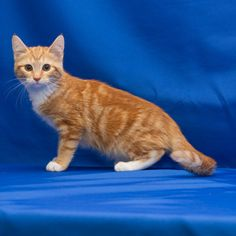 Gingi needs a #foreverhome. Can you help her find one? #100KChallenge