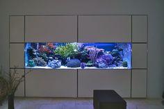 Aquariums Saltwater Fish Tanks Gorgeous