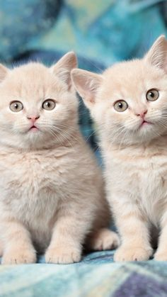 Adorable cats