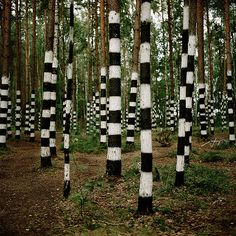 Patterns-stripes, black and white stripes tree, forest Land Art, Art Environnemental, Art Et Nature, Art Et Architecture, Art Public, Instalation Art, Yarn Bombing, Environmental Art, Outdoor Art