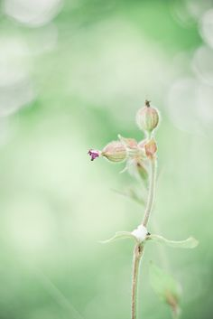Sleeping In Pastels | Flickr - Photo Sharing!